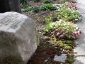 dedication-stone